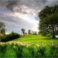 Frühling auf der Imsbach - Theley