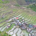 Batad Reisfelder
