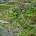 Reisfelder in Hapao