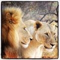 Tier-Fotografie - mehr unter `Meine Bilder´