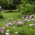 Wanderweg nach St. Ives und Blumen überall.