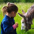 des activités avec les ânes