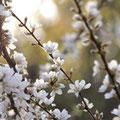 花もも(夕陽):すべてをリセットする力