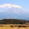 4日目。Stewart Mineral Springs(温泉)への道中。お馬さ〜ん!