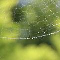 蜘蛛の糸にも連なる珠