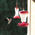 The guest House terrace,a   hummingbird bird !(普通にいるものなのね?!)