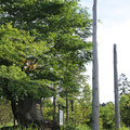薙鎌神社(柱が印象的)