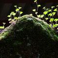 箱根、九頭竜神社 岩はつなぐ「原初」をここへ