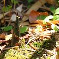 筍:根の豊かな大きなひろがり、爆発的にのびていこうとする意志