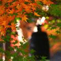 鎌倉(お寺の名前を失念)