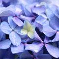 小さな花に、大きな世界がひろがる
