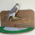 Banco pared de 80cm. Torzuelo 3-4 Gyr falcons x Saker falcon x falco biarmicus