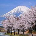 優秀賞 桜並木 市川晴英さん