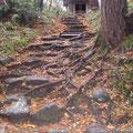 金色堂の近く根っこが階段!