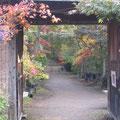 川口市安行 小林紅葉園にて 最高の紅葉でした。