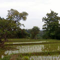North Bali Land for sale by owner directly.