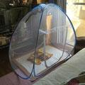 フクロモモンガ(sugarglider)の蚊帳画像
