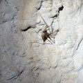 In this cave there are lots of very active cave crickets.