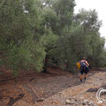 Walking through the olive grove to the cave.