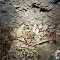 Lots of animal bones on the floor of the passage.