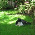 sieste sur l'herbe