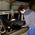 Marie-Noëlle prend grand soin de ses vaches !