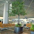 成田国際空港フェイクグリーンシラカシモチーフ