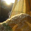 黄色をメインにループ状の糸を使いふわふわ春をイメージ。これから始まる春のワクワクが熊野本宮から届きますように。  熊野本宮染め糸10%  幅32×長さ220センチ