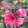 Fraaie bloeiwijze in het voorjaar
