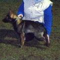 25 januari 2012 - Qby vom Grubenländer Schupo tijdens de training