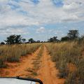 KNP: Fahrt ins wilde Botswana