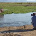 Da man in diesem Park auch aussteigen darf, kommt man sehr nahe an die Tierwelt heran! Ein Traum für Fotografen!