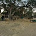 Ruaha NP: Fly-Camp