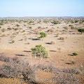 Mashatu GR, Botswana: Regen wäre dringend nötig!!