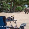 Die Elefanten kommen täglich vorbei um zu sehen, ob neue Camper da sind