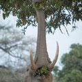 Einige haben sogar gelernt sich auf die Hinterbeine zu stellen! Das gibt es nur hier und ist eine Seltenheit in der Tierwelt!