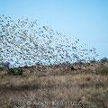 KNP: Vögel, Vögel, Vögel....