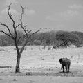 Auf Pirschfahrt im Hwange Nationalpark