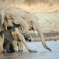 Katavi NP: Elefantenfamilie