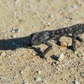 Erste Tierbegegnung in Namibia: Ein Chamäleon