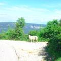 Mähhhh - Schafe auf der Strecke