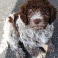 Fjalla, 10 Wochen alt