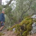 unterwegs im Nebelwald