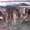 getrocknete Lachsstreifen für die Huskys