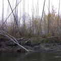 traurige Anblicke - Waldbrände - Tod und Leben auf einem Blick