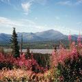 Wrangell Mts. im Hintergrund