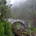 Wasserbrücke im Nebelwald