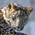Tonis Zoo 30.10.10