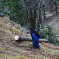 Holz geht Dank der Winde