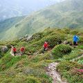 wunderschöne Alpenrosen